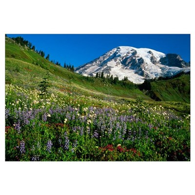 Wildflowers blooming in front of snowy Mount Raini Canvas Art