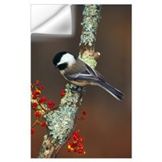 Black-capped chickadee bird on tree branch with be Wall Decal