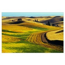 Patterns in farm fields, rolling hills of Palouse Poster