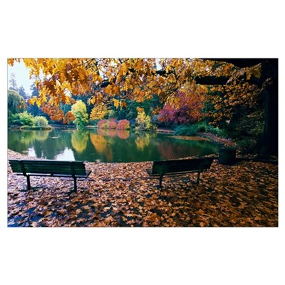 Autumn color trees and fallen leaves along pond, e Poster