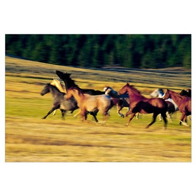 Herd of horses running, Oregon, united states, Canvas Art