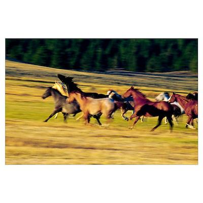 Herd of horses running, Oregon, united states, Poster