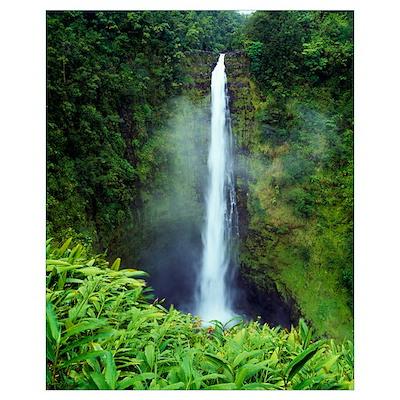 Misty Akaka Falls, Akaka Falls State Park, Big Isl Poster
