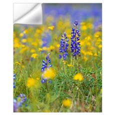 Texas bluebonnet flowers in bloom among yellow wil Wall Decal