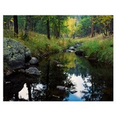 Calm water of Grace Coolidge Creek, Custer State P Poster