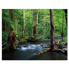 Rushing stream through dense forest, Great Smoky M Poster