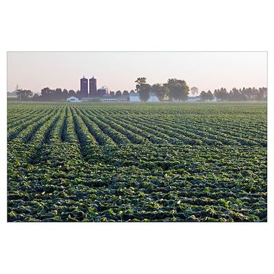 Soy bean field, distant farm buildings, Iowa Poster