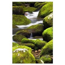 Moss-covered boulders and small cascades along Roa Poster