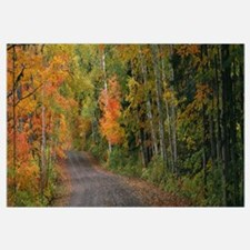 Road passing through a forest, Keweenaw County, Ke