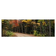 Road passing through a forest, Keweenaw County, Ke Poster