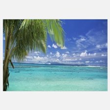 Palm tree on the beach, Huahine Island, Society Is