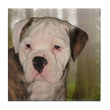 English Bulldog puppy2 Tile Coaster