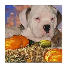 English Bulldog Puppy1 Tile Coaster