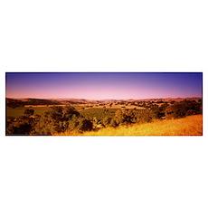 Vineyard, Firestone Vineyard, Los Olivos, Santa Yn Poster
