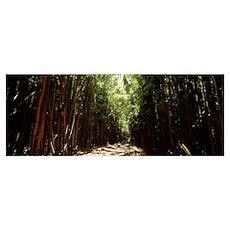 Dirt road passing through a forest, Haleakala Nati Poster