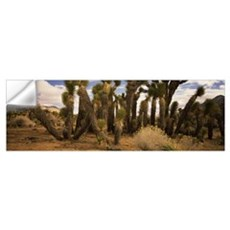 Joshua trees in a landscape, Walker Pass, Kern Cou Wall Decal