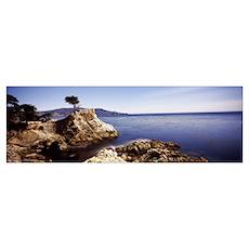 Cypress tree at the coast, The Lone Cypress, 17 mi Poster