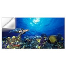 Hawksbill turtle (Eretmochelys Imbricata) and Fren Wall Decal