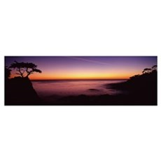 Silhouette of lone cypress tree on a cliff, 17 Mil Framed Print