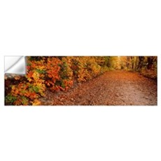 Road passing through autumn forest, Traverse City, Wall Decal