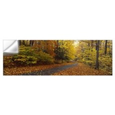 Road passing through autumn forest, Chestnut Ridge Wall Decal