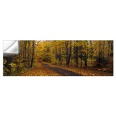 Road passing through a forest, Chestnut Ridge Coun Wall Decal