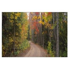 Dirt road passing through autumn forest, Keweenaw