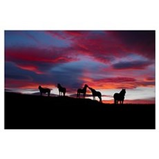 Silhouette of horses at night Iceland Poster
