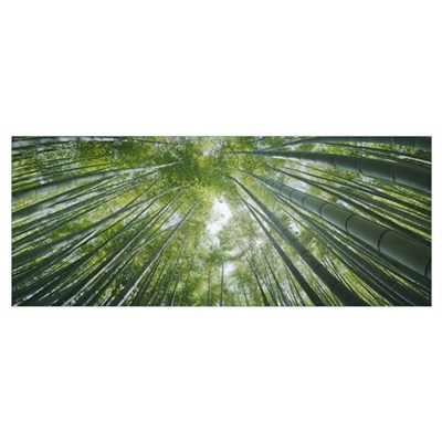 Low angle view of bamboo trees Poster
