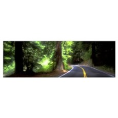 Road Redwoods Mendocino County California Framed Print