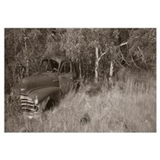 Antique Car Field