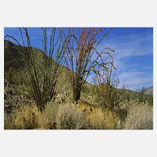 Cactus on a landscape, Anza Borrego Desert State P
