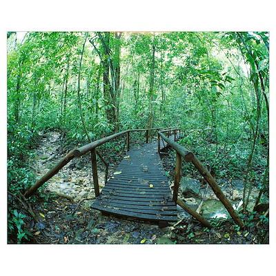 Footbridge Through Rain forest Costa Rica Poster