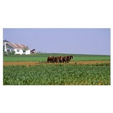 Amish Plowing Field Lancaster County PA Poster