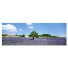 Lavender Field Provence France Canvas Art