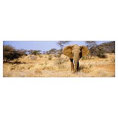 Elephant Kenya Africa Poster