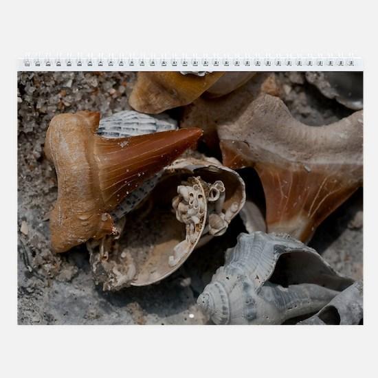Ugly Seashells