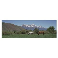 Horses and Teton Range Grand Teton National Park W Poster
