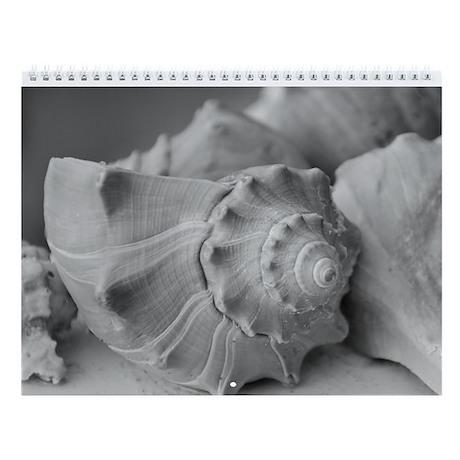 Black & White Ugly Seashells