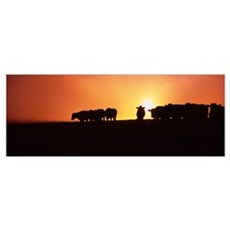 Silhouette of cows at sunset, Point Reyes National Framed Print