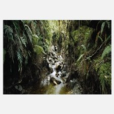 Stream flowing in a forest, Milford Sound, Fiordla
