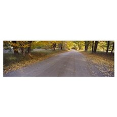 Autumnal leaves fallen on a road in a forest, Slee Poster
