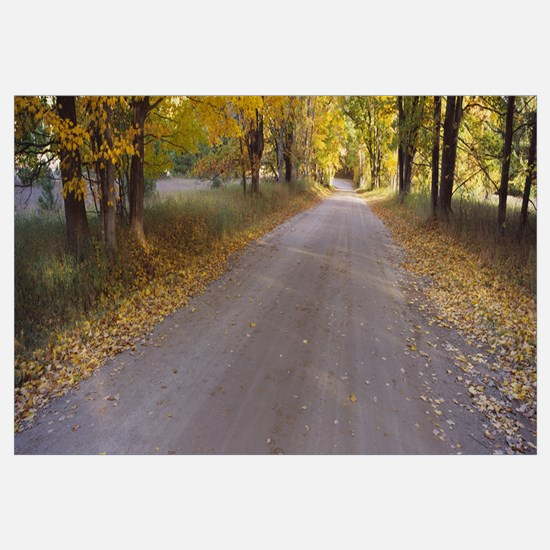 Autumnal leaves fallen on a road in a forest, Slee