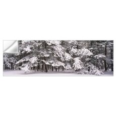 Snow covered trees in a forest, Chestnut Ridge Cou Wall Decal