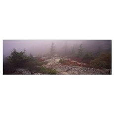 Trees covered with fog, Cadillac Mountain, Acadia  Poster