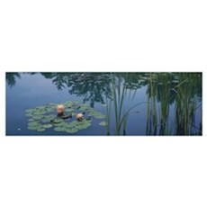 Water lilies in a pond, Denver Botanic Gardens, De Canvas Art