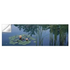 Water lilies in a pond, Denver Botanic Gardens, De Wall Decal