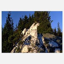Trees in a forest, Shining Rock, Shining Rock Wild