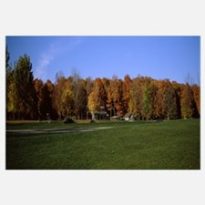 Autumnal maple trees in a field, Bruce's Mill Cons