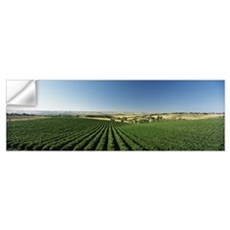 Vineyard, McLaren Vale, South Australia, Australia Wall Decal